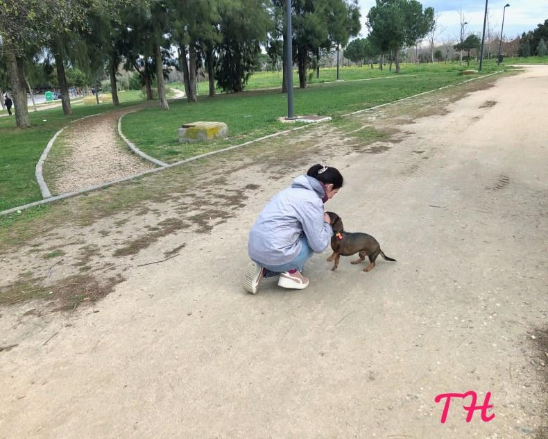 Lenguaje corporal humano en perros