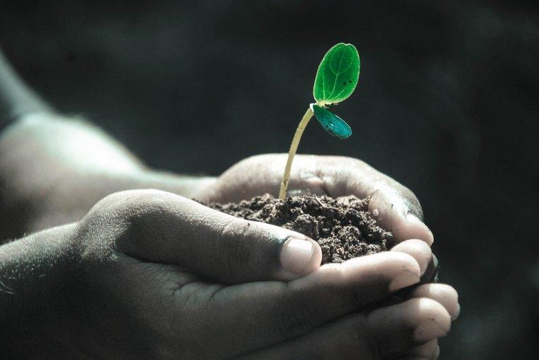 curso de jardinería y restauración del paisaje.