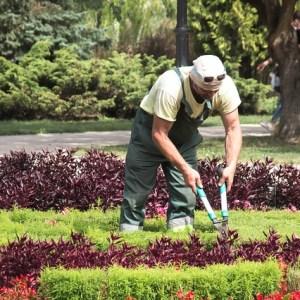 curso de gestión de maquinaria, equipos e instalación de jardineria
