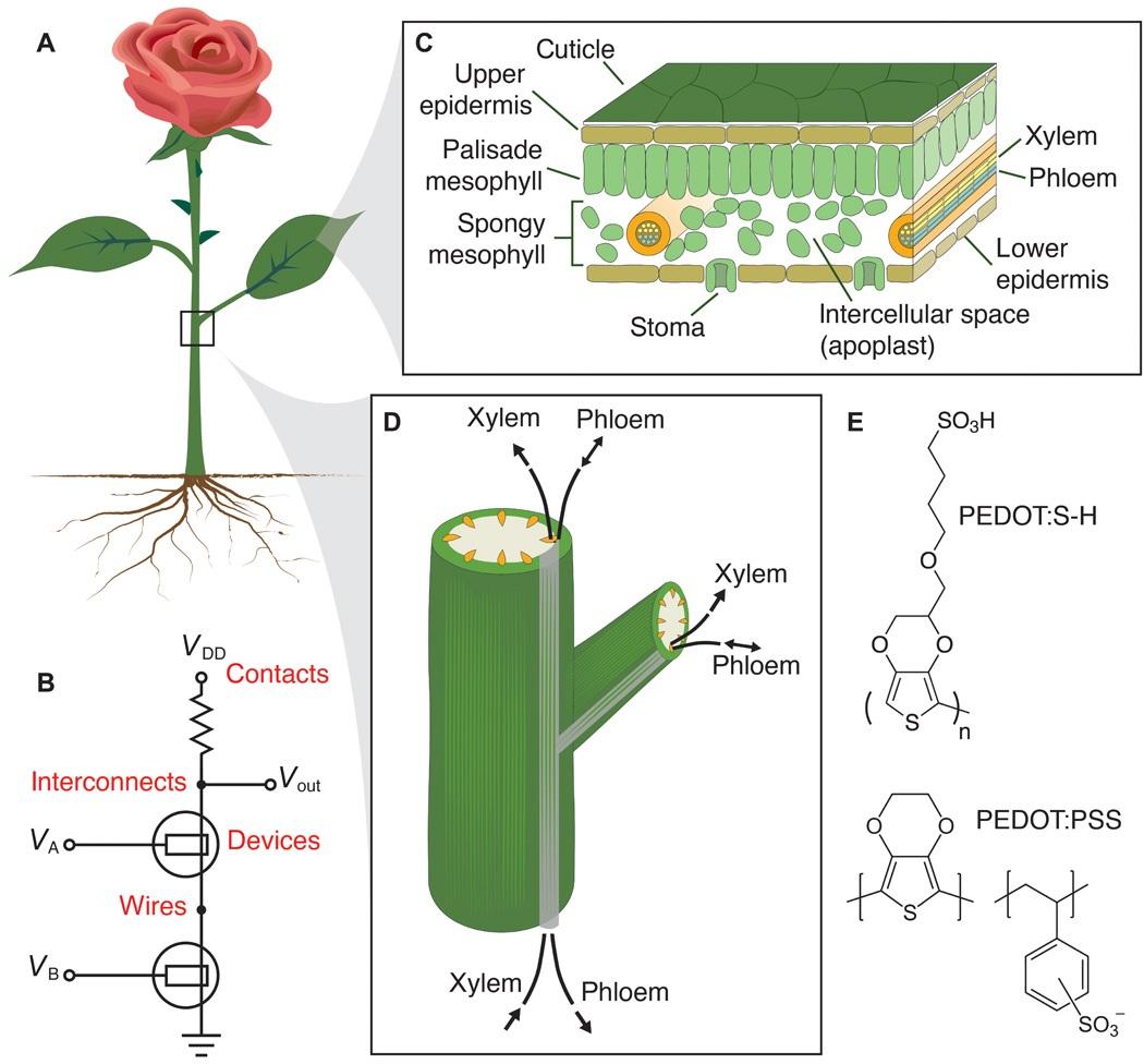 Flor Bionica Cientistas Montaram Circuitos Eletronicos