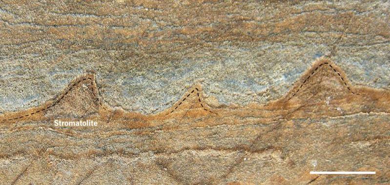 CIENCIAS NATURALES: Ciencias de la Tierra y del Espacio Hallan los fósiles más antiguos conocidos hasta ahora imprimir este contenidoFacebookDeliciousMeneameArroba   ¿Cuándo emergió la vida en la Tierra? Múltiples estudios la sitúan hace 4.000 millones de años. Ahora, una nueva investigación apoya esta hipótesis con el hallazgo de los fósiles más antiguos jamás descubiertos hasta ahora que datan de hace 3.700 millones de años. Se trata de varios estromatolitos –estructuras formadas por la sedimentación de microorganismos– encontrados en Groenlandia que superan así la edad de los fósiles descubiertos anteriormente en Australia datados en 3.500 millones de años de antigüedad. Más información sobre:estromatolitosIsuafósilesvidaGroenlandia SINC       31 agosto 2016 19:00 Vista transversal de un fragmento de roca en el que se pueden ver los estromatolitos de forma cónica de 3.700 millones de años de antigüedad. / Yuri Amelin Vista transversal de un fragmento de roca en el que se pueden ver los estromatolitos de forma cónica de 3.700 millones de años de antigüedad. / Yuri Amelin