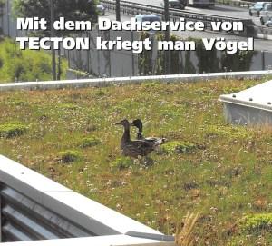 Mit dem Dachservice von TECTON kriegt man Vögel