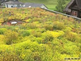 Dach-Bestandesaufnahme in Brunnen (SZ)