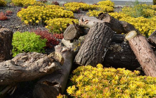 Dachbegrünungen, natürliche Siedlungsbiotope