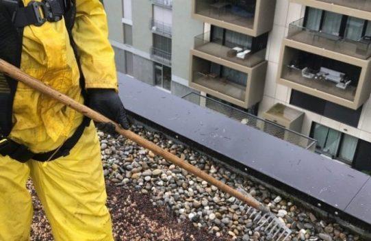 Dachpflege in Opfikon