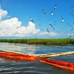 Carl Safina: The oil spill's unseen culprits, victims