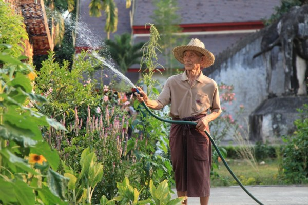 LGV168 2015-02-22 thailand chiang mai sunday wat gardener portrait 9 copy
