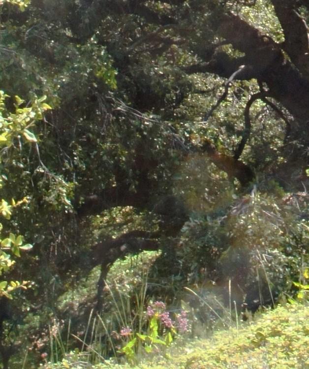 Orbs among the Oaks – TedDenmark com