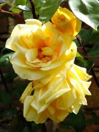 Lady Hillingdon Clg