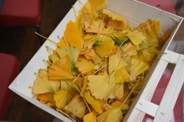 Drying Ginkgo leaves