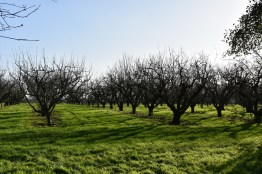 The Apple Orchards