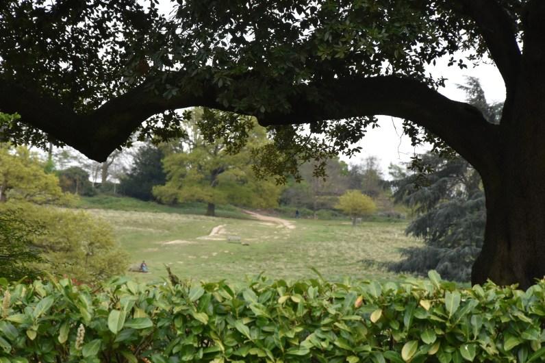 The slopes of Richmond Park