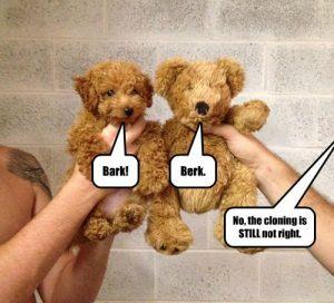 13 Funniest Teddy Bear Dog Memes