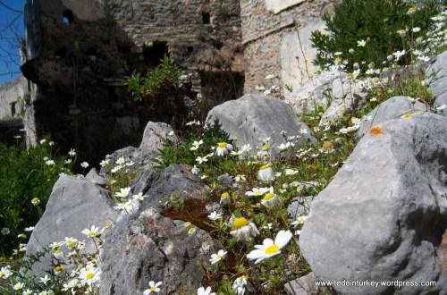 A kayaköyi szellemfalu tavasszal, bimbózó élet az elmúláson