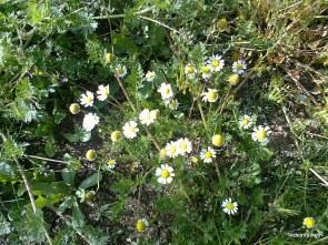 Néhány tavaszi kép innen, Diyből