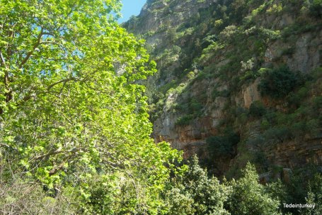 butterfly valley 144