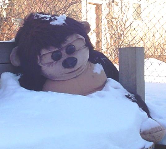 snow-gorilla.jpg
