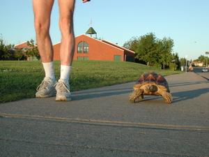 TortoiseWalking02.jpg
