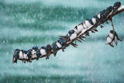 13 снимки на животни през зимата