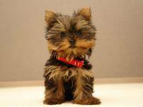 Сладурче куче