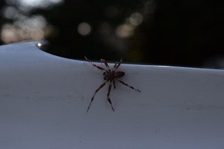 Spiders are a lot cooler when you realize how practically-harmless they are.