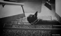 300-bw-stairs-dogs-073016_027