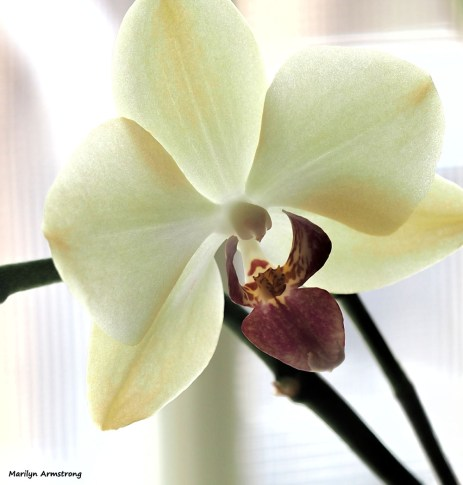 300-orchids-two-041917_021