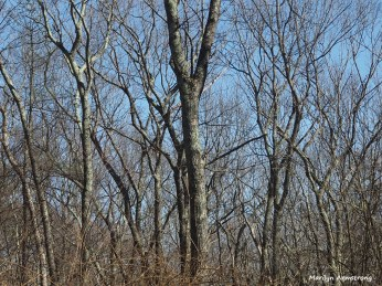 300-trees-gardening-040917_007