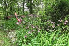 180-Full-Late-May-Garden-052417_053
