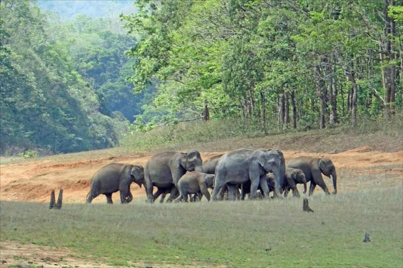 Periyar National Park elephants India