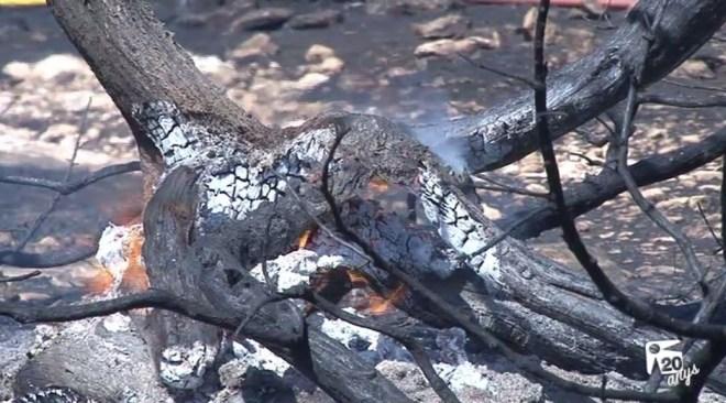 08/09 Un incendi crema 7.100 metres quadrats a Formentera