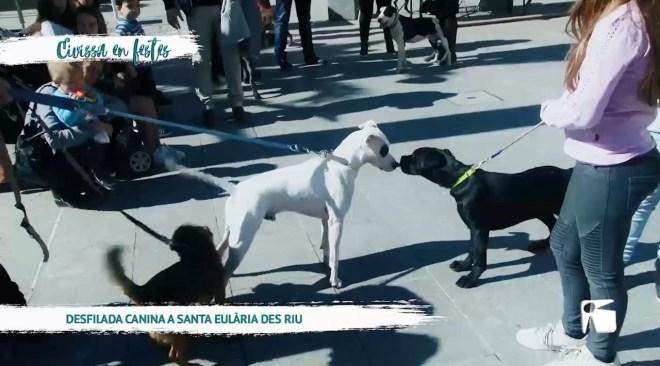 04/03 Eivissa en festes - Desfilada Canina a Santa Eulària