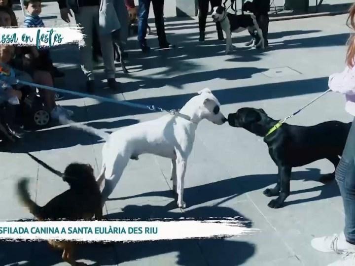 04/03 Eivissa en festes – Desfilada Canina a Santa Eulària