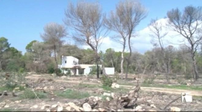 22/10 El Partit Popular de Formentera vol reclamar al Govern Balear la reforestació del bosc de Cala Saona