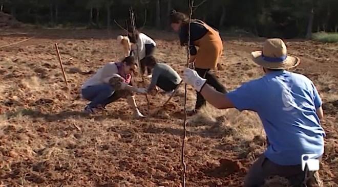 18/02 L'Associació de Productors d'Agricultura Ecològica d'Eivissa i Formentera planta més de 500 arbres joves