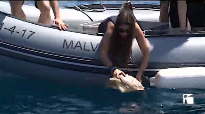 16/07/2019 Alliberen tres tortugues marines al Parc natural de Ses Salines
