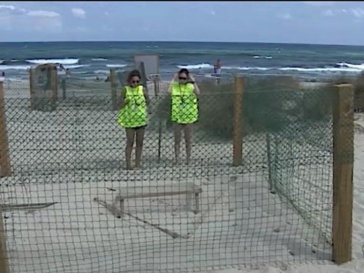20/08/2019 Voluntaris per cuidar ous de tortugues