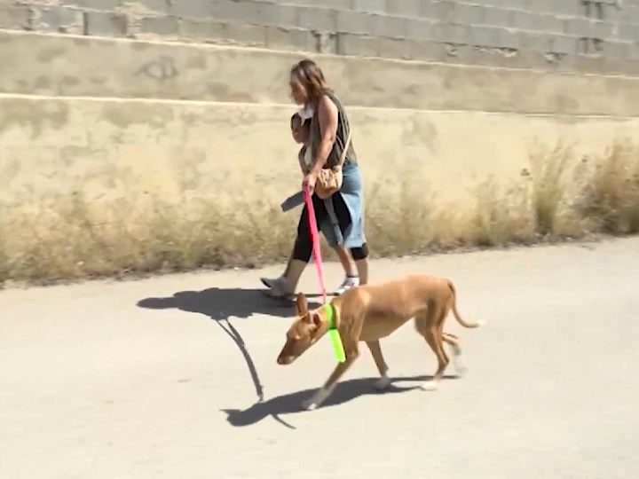 03/06/2020 Els cans de Sa Coma tornen a passejar