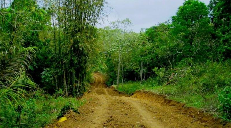 Pemda Muna Diduga Mengeksplorasi Hutan Lindung Warangga Tanpa Izin