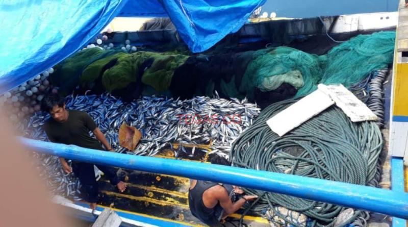 Puluhan Ton Ikan Tak Terjual, Nelayan Menjerit