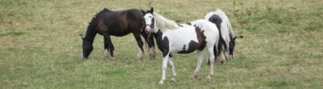 Mr Harries' horses (2)