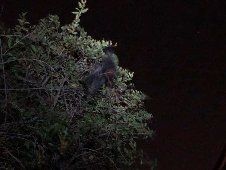 Bat in a tree