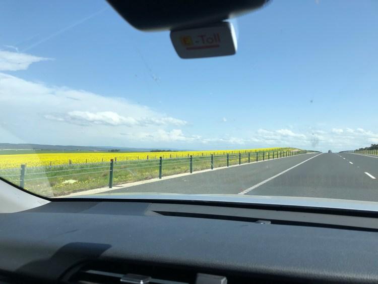Yellow follow field