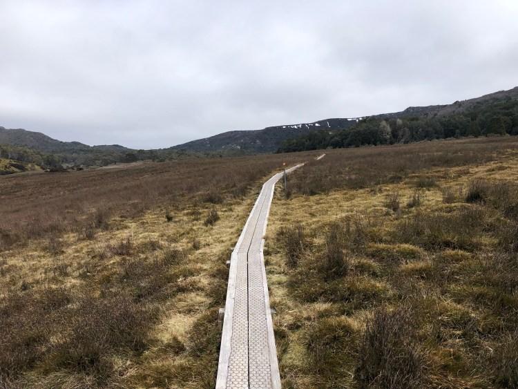 boardwalk through meadow