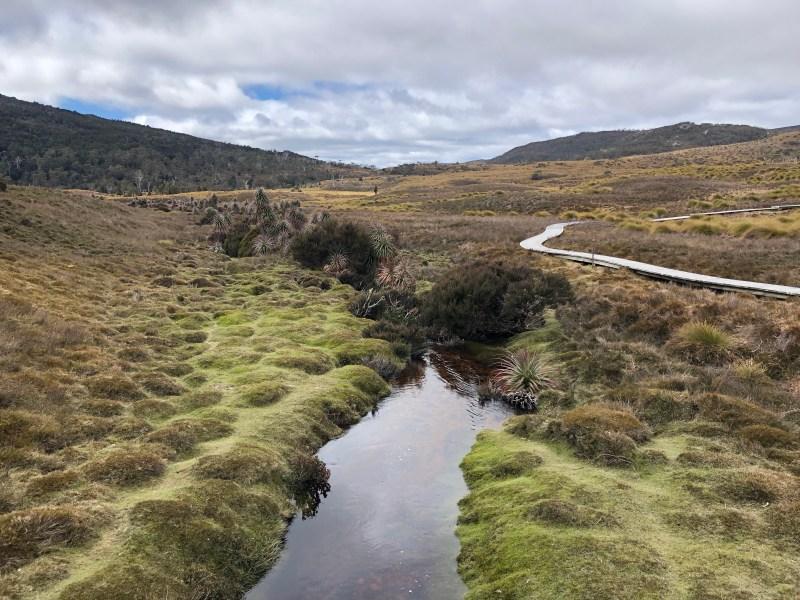 still water in meadow