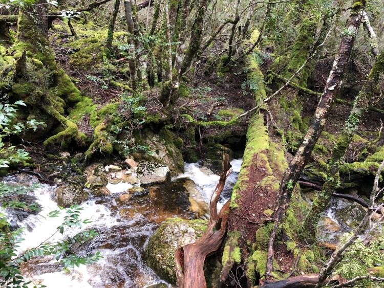 fallen tree over river