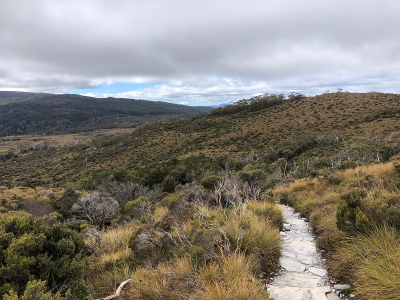 hiking path in meadow