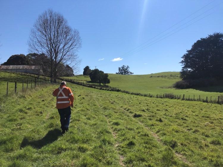Man walking in field