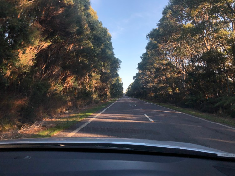 Road with trees around