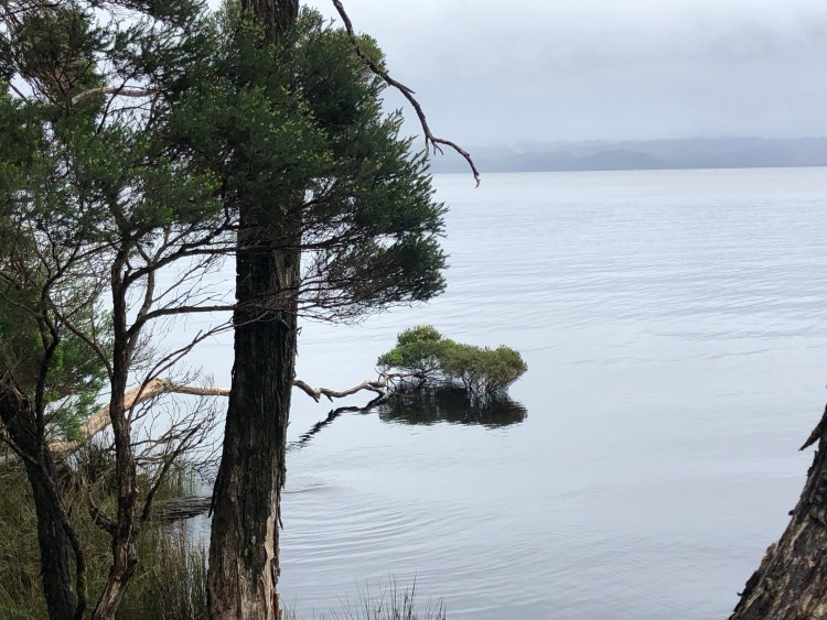 Tree laying on ocean